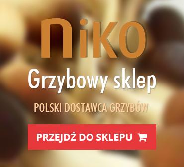 GrzybyLecznicze_Banner_370x336